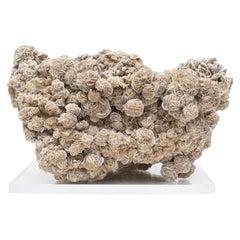 """Selenite """"Desert Rose"""" Mineral Mounted on Lucite"""