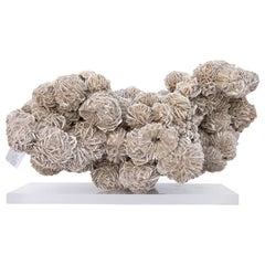 """Selenite """"Desert Rose"""" Mineral with Lucite"""
