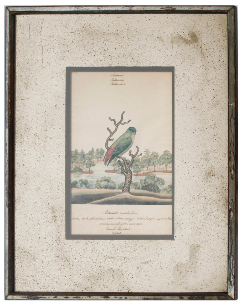 English Series of Four William Goodall Watercolor Paintings of Birds, circa 1790 For Sale