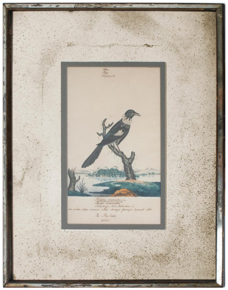 Bronzed Series of Four William Goodall Watercolor Paintings of Birds, circa 1790 For Sale