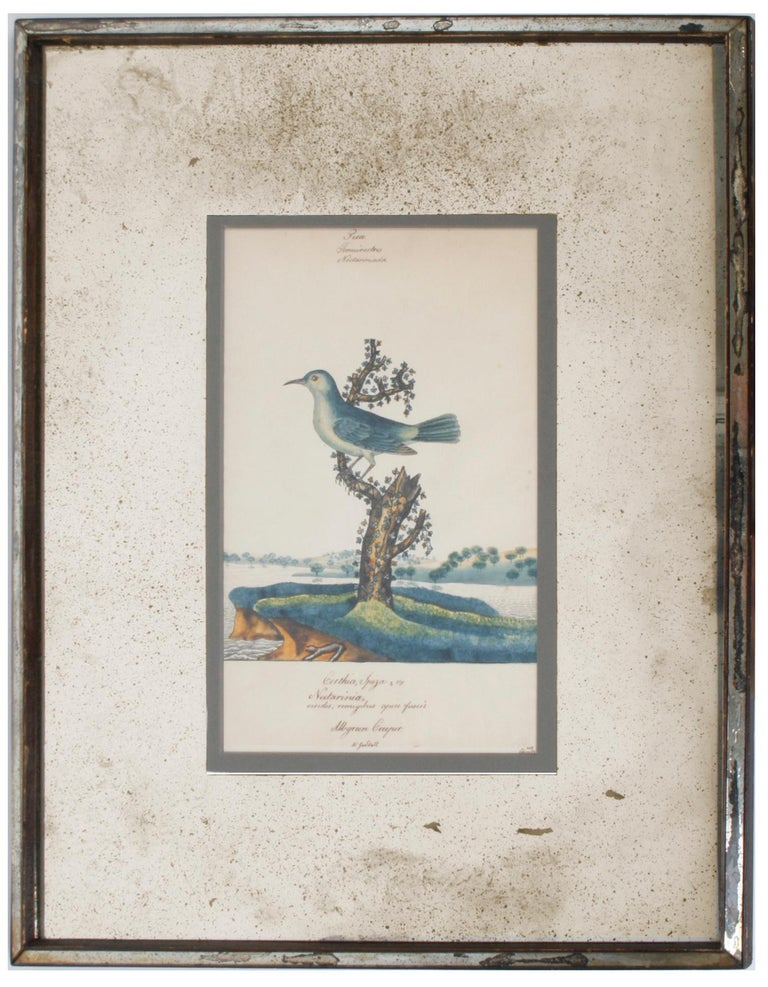 Series of Four William Goodall Watercolor Paintings of Birds, circa 1790 In Good Condition For Sale In valatie, NY