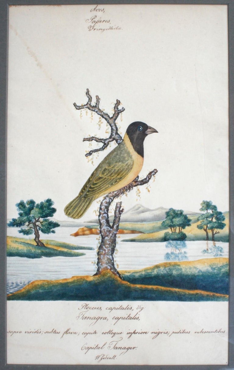 18th Century Series of Four William Goodall Watercolor Paintings of Birds, circa 1790 For Sale