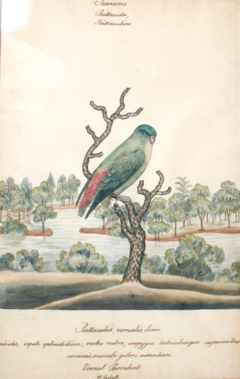 Mirror Series of Four William Goodall Watercolor Paintings of Birds, circa 1790 For Sale
