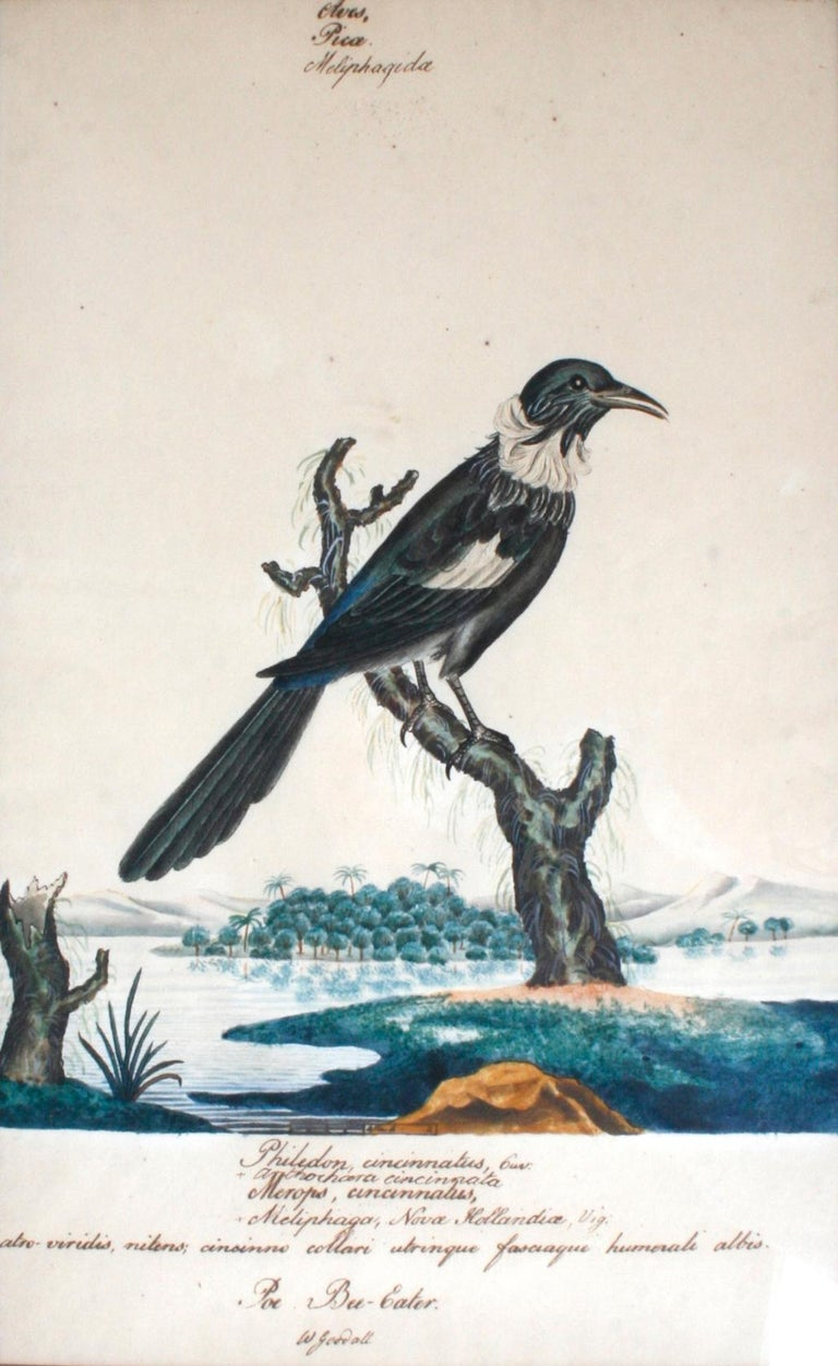 Series of Four William Goodall Watercolor Paintings of Birds, circa 1790 For Sale 1