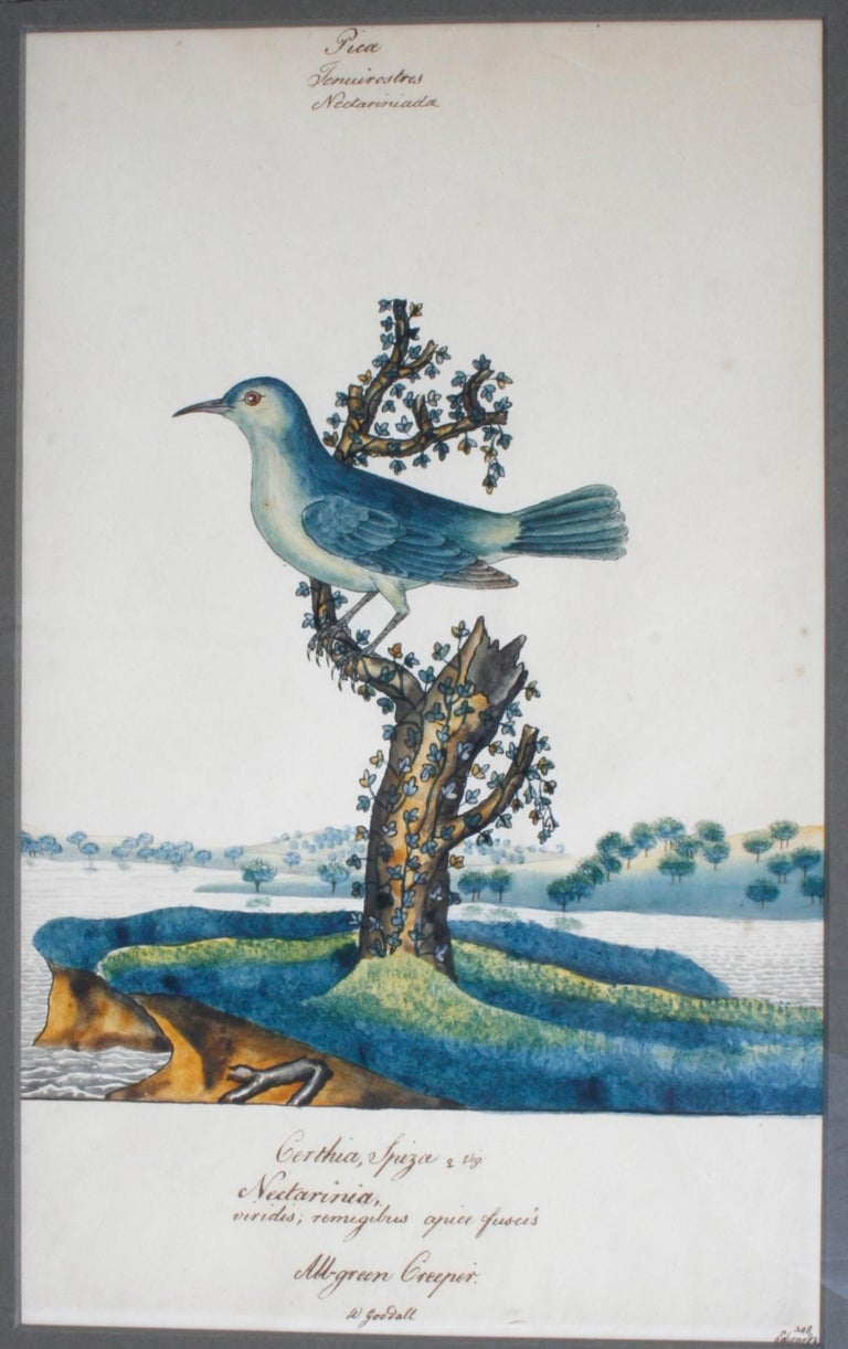 Series of Four William Goodall Watercolor Paintings of Birds, circa 1790 For Sale 2