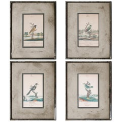 Series of Four William Goodall Watercolor Paintings of Birds, circa 1790