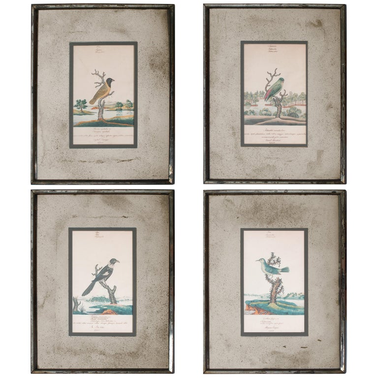 Series of Four William Goodall Watercolor Paintings of Birds, circa 1790 For Sale