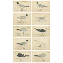 Set of 10 Antique Bird Prints of various Sea Birds, circa 1867