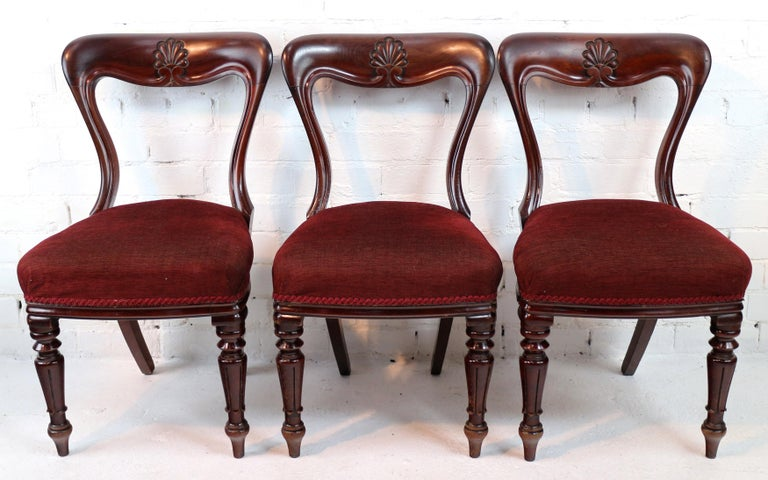 Set of 10 Antique English William IV Mahogany Dining Chairs by J Proctor For Sale 8