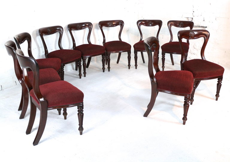 A fantastic set of ten William IV mahogany dining chairs dating to circa 1830 and by J Proctor. Made from the best quality dense and finely figured mahogany these are heavier than standard chairs of this model, the waisted balloon back with a deep