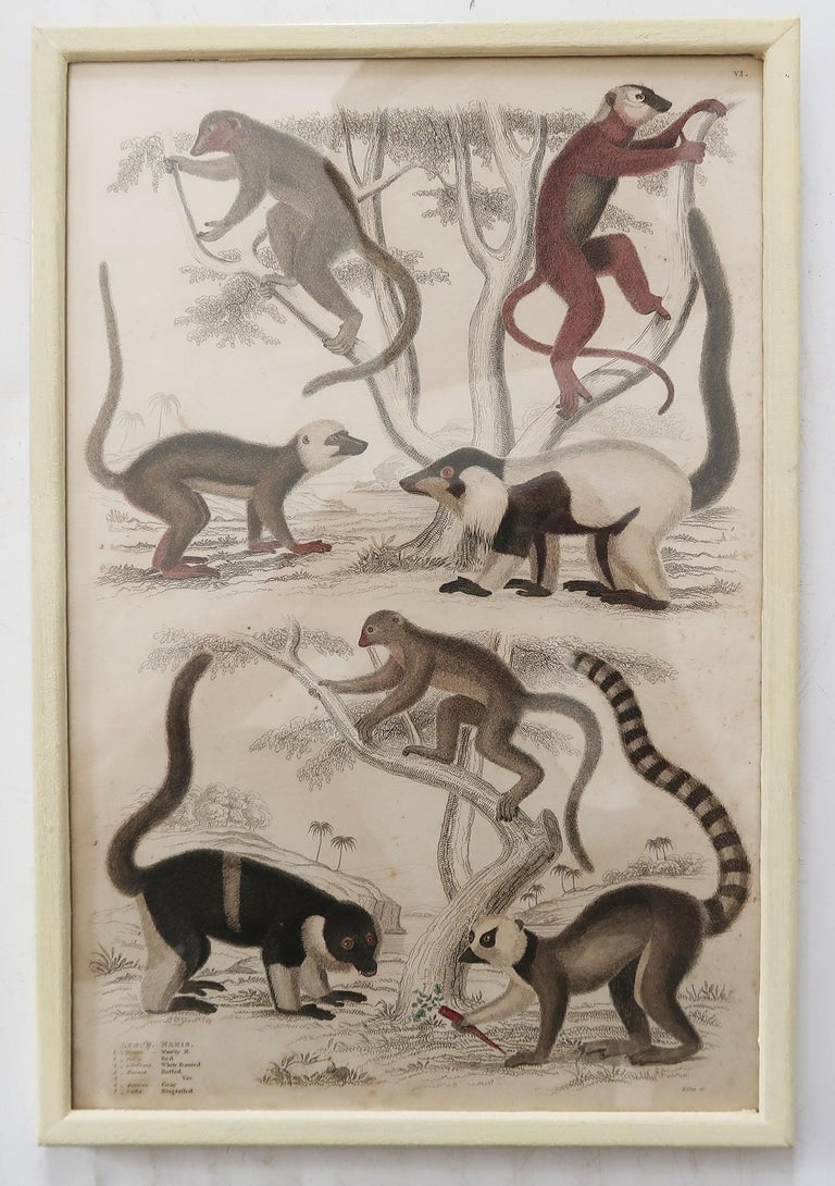 Set of 10 Antique Monkey Prints in Faux Ivory Frames, 1830s For Sale 2