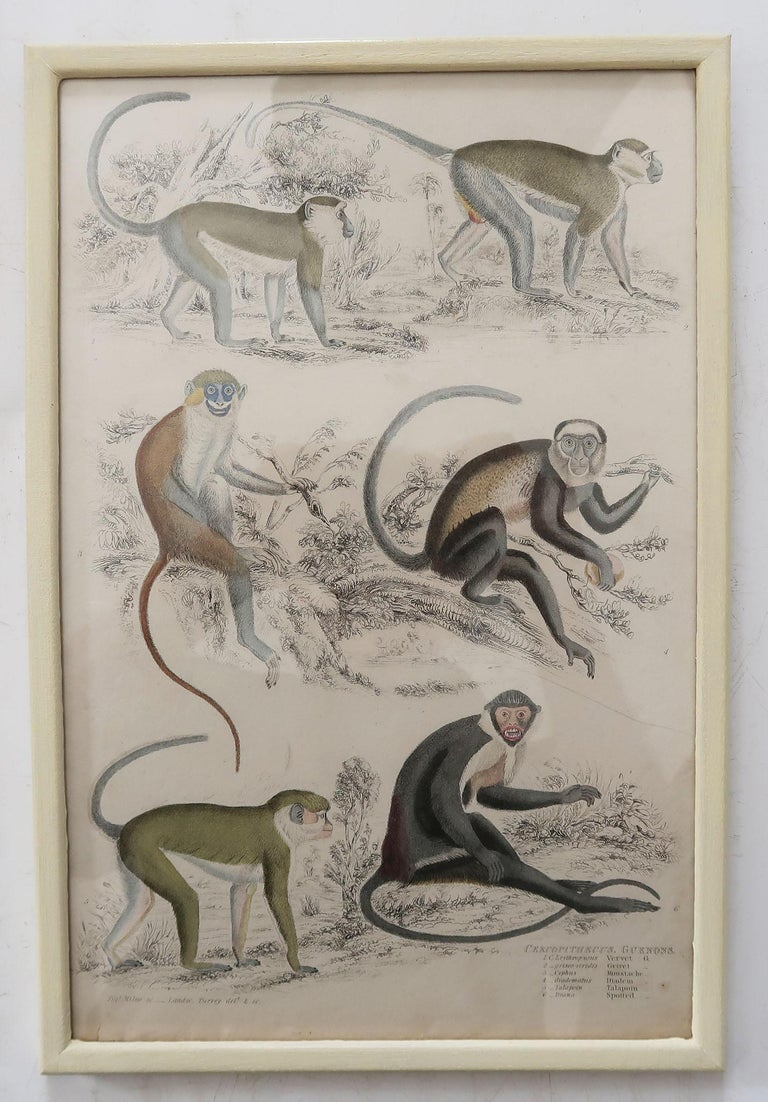 Set of 10 Antique Monkey Prints in Faux Ivory Frames, 1830s For Sale 3