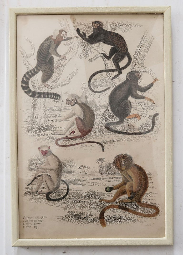 Wonderful set of 10 antique monkey prints.