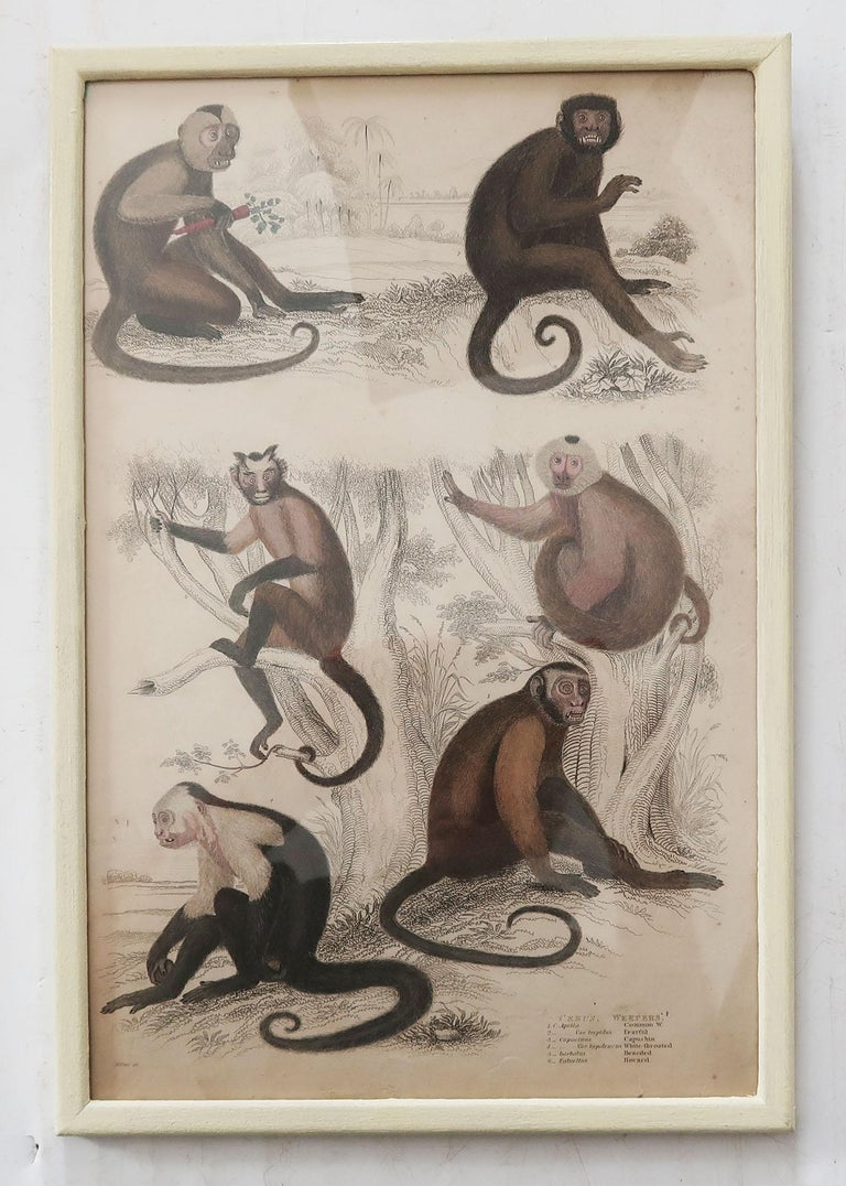 Anglo-Indian Set of 10 Antique Monkey Prints in Faux Ivory Frames, 1830s For Sale