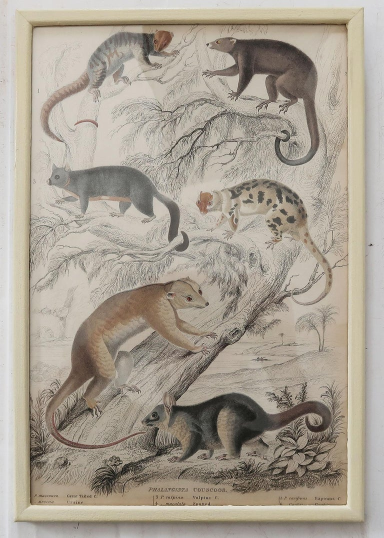 English Set of 10 Antique Monkey Prints in Faux Ivory Frames, 1830s For Sale
