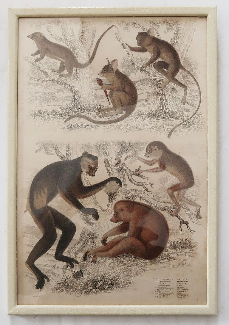 Other Set of 10 Antique Monkey Prints in Faux Ivory Frames, 1830s For Sale