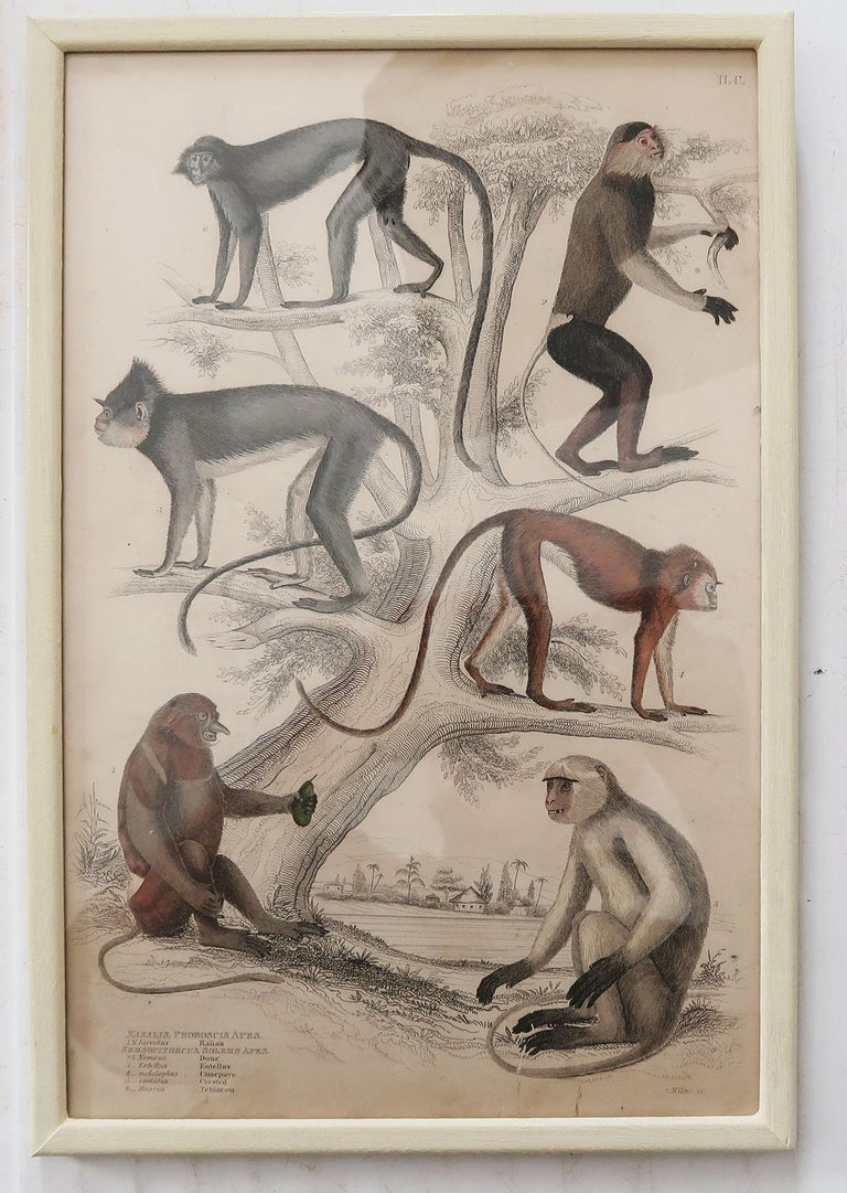 Set of 10 Antique Monkey Prints in Faux Ivory Frames, 1830s In Good Condition For Sale In St Annes, Lancashire
