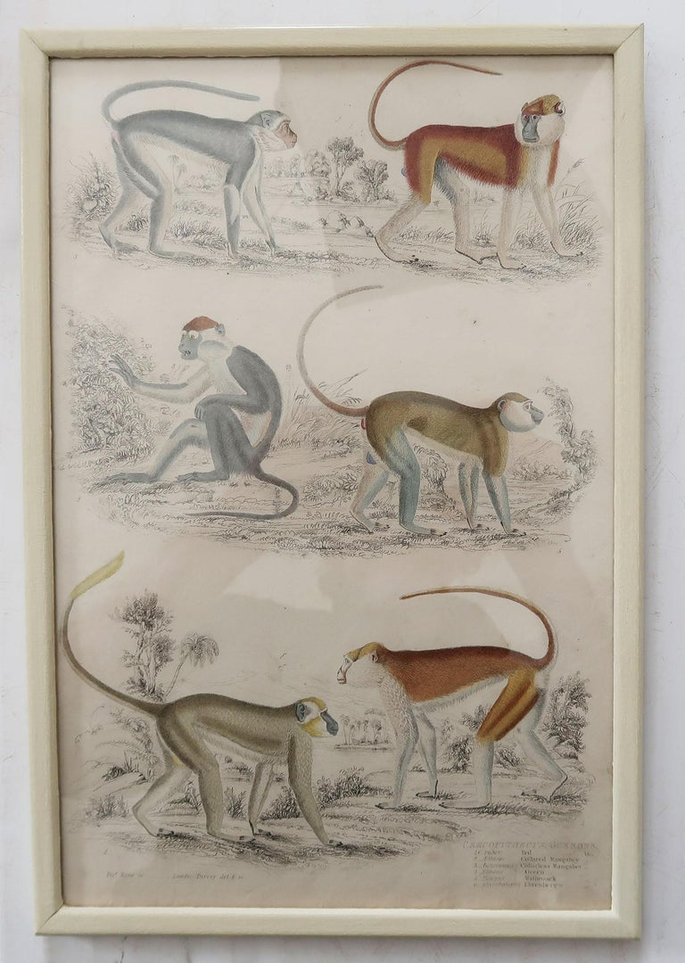 Mid-19th Century Set of 10 Antique Monkey Prints in Faux Ivory Frames, 1830s For Sale