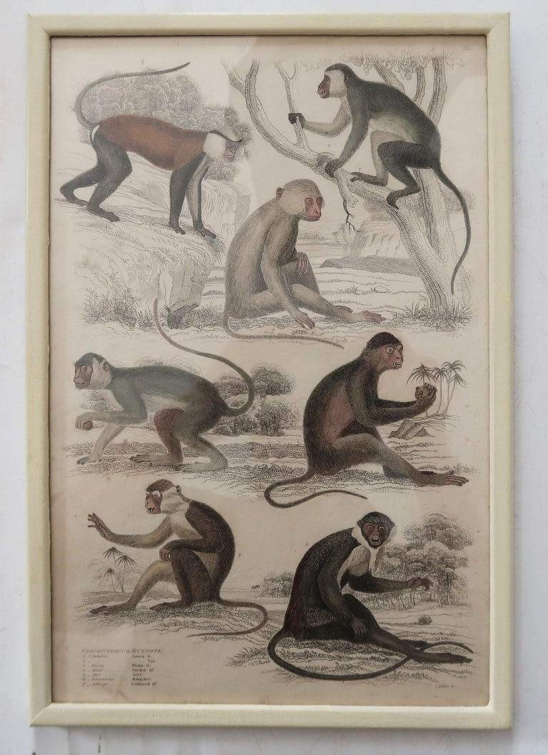 Set of 10 Antique Monkey Prints in Faux Ivory Frames, 1830s For Sale 1