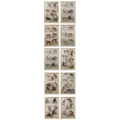 Set of 10 Antique Monkey Prints in Faux Ivory Frames, 1830s