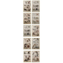 Set of 10 Antique Monkey Prints in Faux Ivory Frames, 1830s