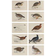 Set of 10 Original Antique Prints of Game Birds, circa 1870