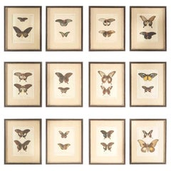 Set of 12 18th Century Engravings of Butterflies