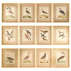Set of 12 18th Century Martinet Birds