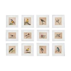 Set of 12 1920s Ornithological Watercolors of Australian Interest