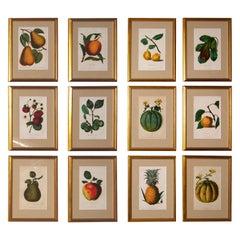 Set of 12 19th Century Chromolithographs of Fruit