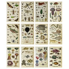 Set of 12 Antique Natural History Prints, 1847
