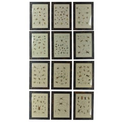 Set of 12 Antique Spider Prints, 1861