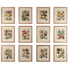 Set of 12 Apple Engravings by Johann Knoop