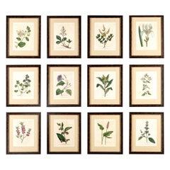 Set of 12 Botanical Engravings by Woodville