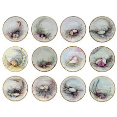 Set of 12 D&C Limoges Plates Painted with Shells