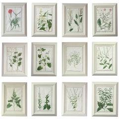 Set of 12 English 18th Century Botanical Studies