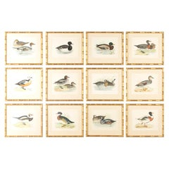 Set of 12 Engravings of Ducks