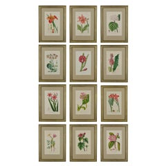 Set of 12 Extremely Fine Hand Coloured Engravings