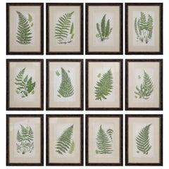 Set of 12 Ferns by Anne Pratt