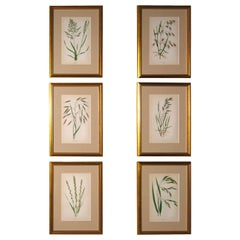 Set of 12 Handcolored Grasses Prints
