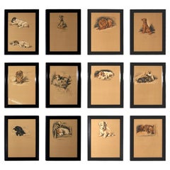 Set of 12 Lucy Dawson Dog Prints
