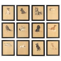 Set of 12 Lucy Dawson Dogs