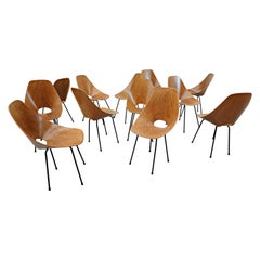 Set of 12 Medea Chairs by Vittorio Nobili