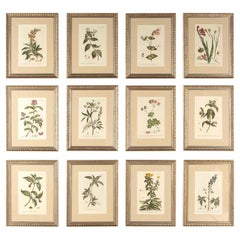 Set of 12 Philip Miller Engravings