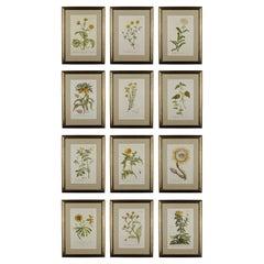Set of 12 Philip Miller Engravings from an Original Nürnberg German Edition