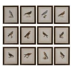 Set of 12 Swedish Chromolithographs of Birds of Prey