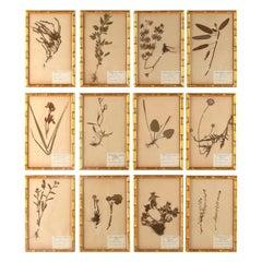 Set of 12 Swedish Herbariums 1930s