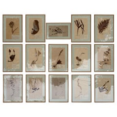 Set of '15' 19th Century Framed Botanical Specimens