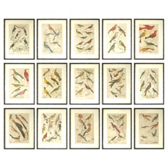 Set of 15 Antique Bird Prints in Faux Bamboo Frames, 1830s