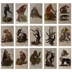 Set of 15 Original Antique Prints of Monkey's, circa 1810